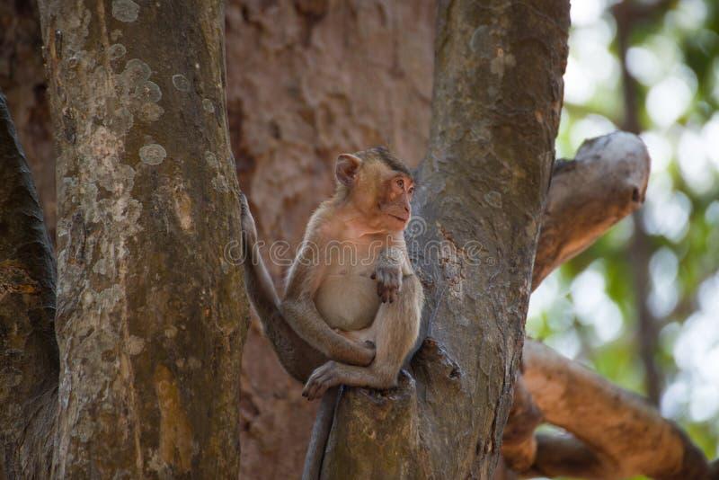 Pequeño mono que se relaja en árbol en Tailandia imagen de archivo