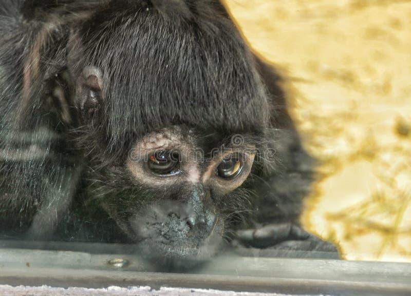 Pequeño mono triste fotos de archivo