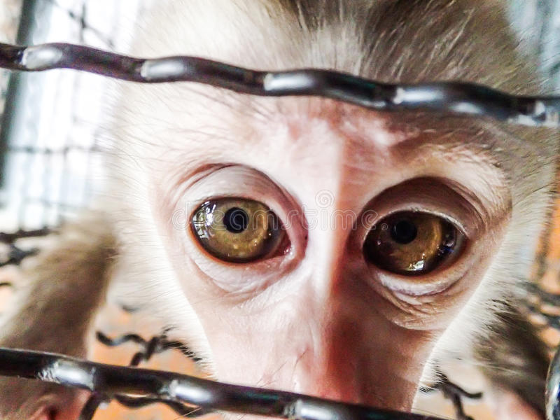 Pequeño mono triste en una jaula imagen de archivo
