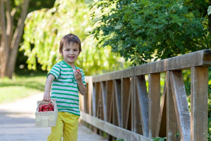 Pequeño muchacho caucásico lindo, comiendo las fresas en el parque fotografía de archivo