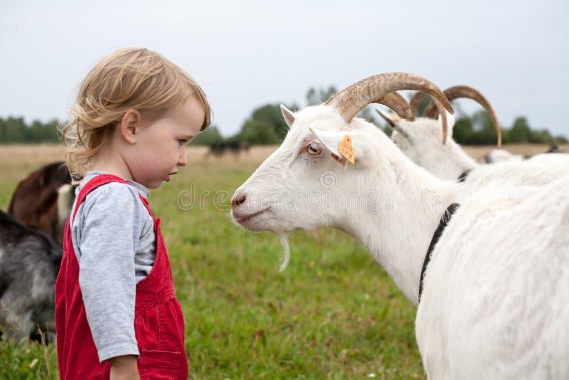 Pequeño niño con la cabra blanca fotos de archivo libres de regalías