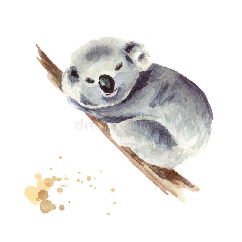 Pequeño oso de koala que se sienta en una rama de árbol, aislada en el fondo blanco Ejemplo dibujado mano de la acuarela stock de ilustración