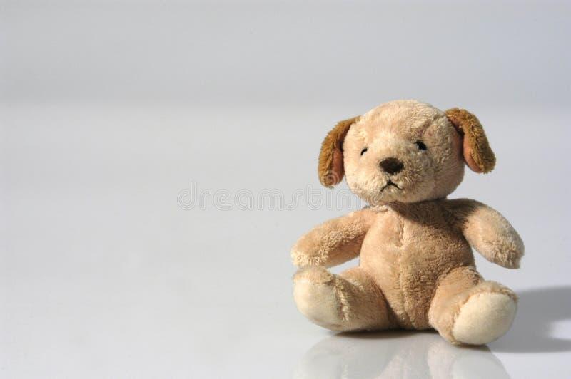 Pequeño oso de peluche que se sienta en un estudio fotos de archivo libres de regalías