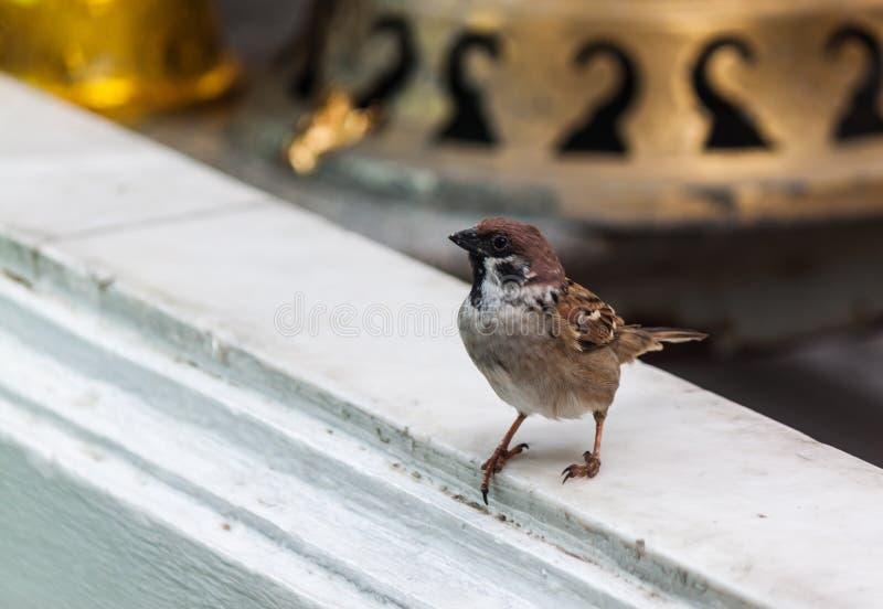 Pequeño pájaro imagenes de archivo