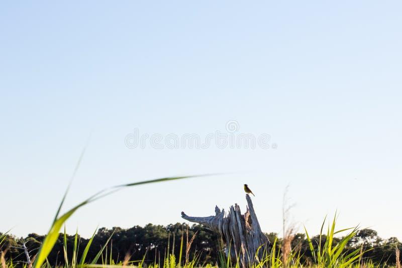 Pequeño pájaro de la curruca que se sienta en tocón de árbol imagen de archivo