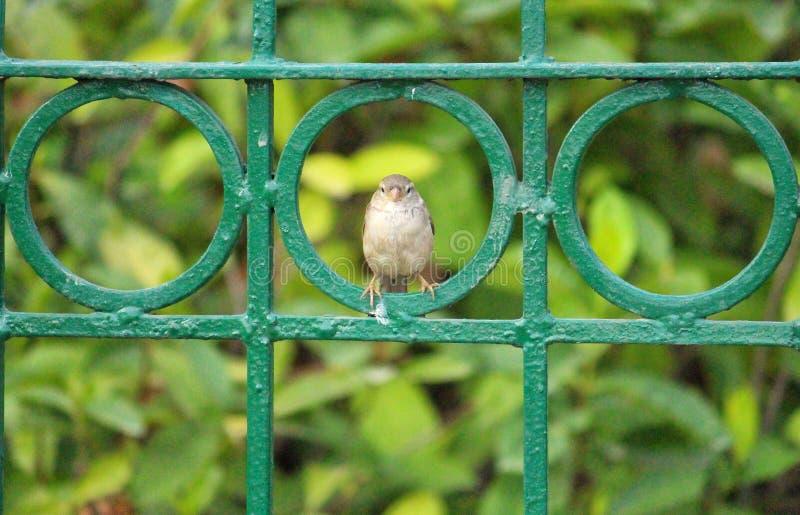 Pequeño pájaro dulce fotografía de archivo libre de regalías