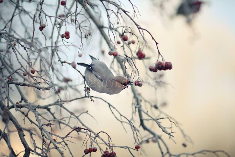 Pequeño pájaro en el invierno frío foto de archivo