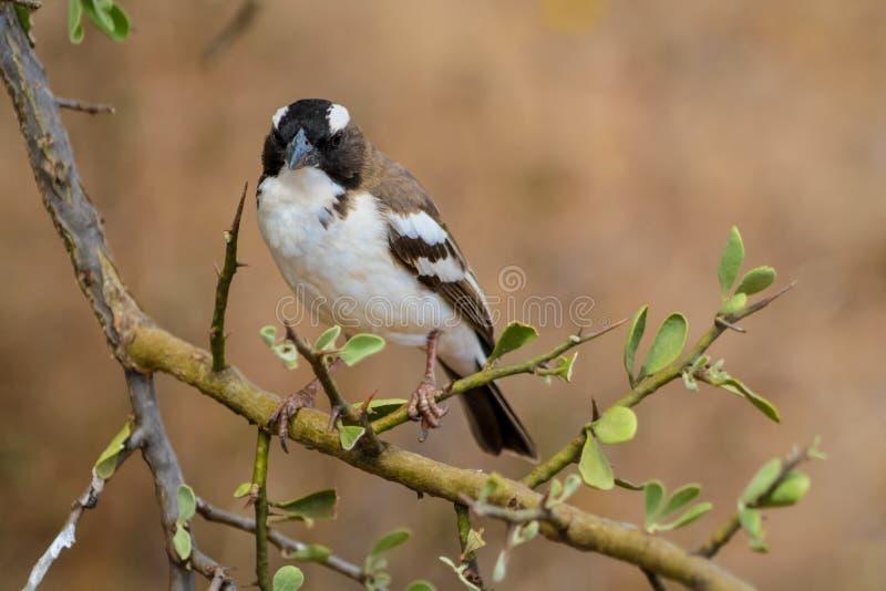 Pequeño pájaro en la naturaleza salvaje que se sienta en una rama de árbol imagen de archivo