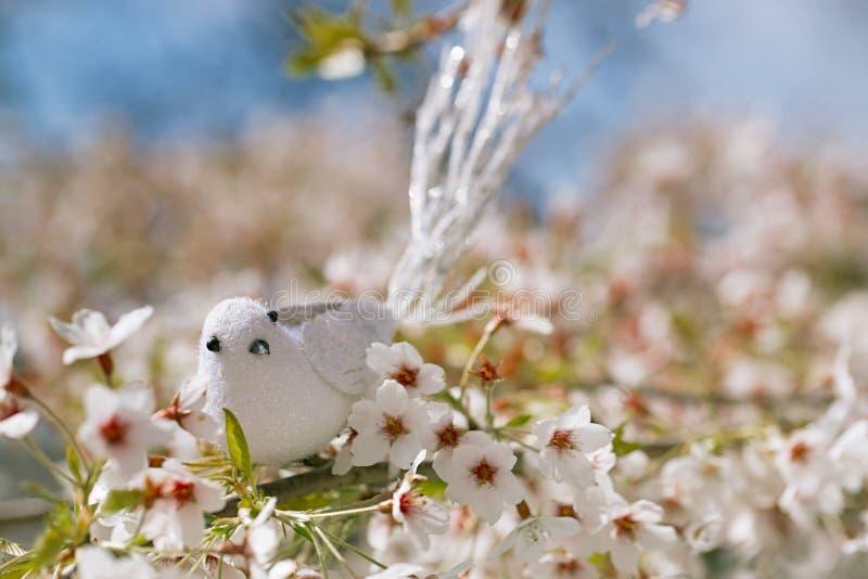 Pequeño pájaro en primavera con la cereza del flor foto de archivo