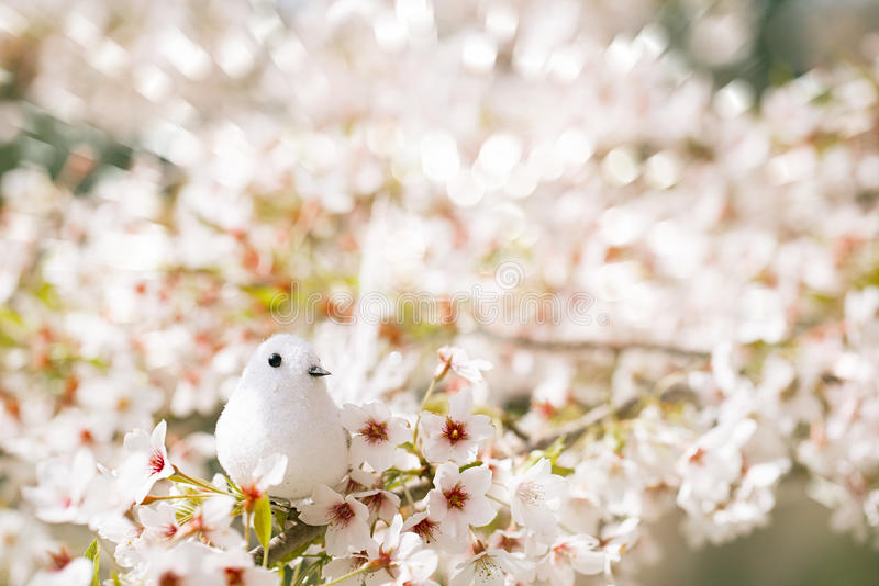 Pequeño pájaro en primavera con la flor Sakura de la cereza del flor foto de archivo libre de regalías