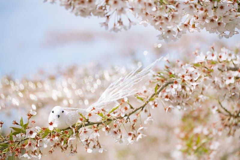 Pequeño pájaro en primavera con la flor Sakura de la cereza del flor imagenes de archivo
