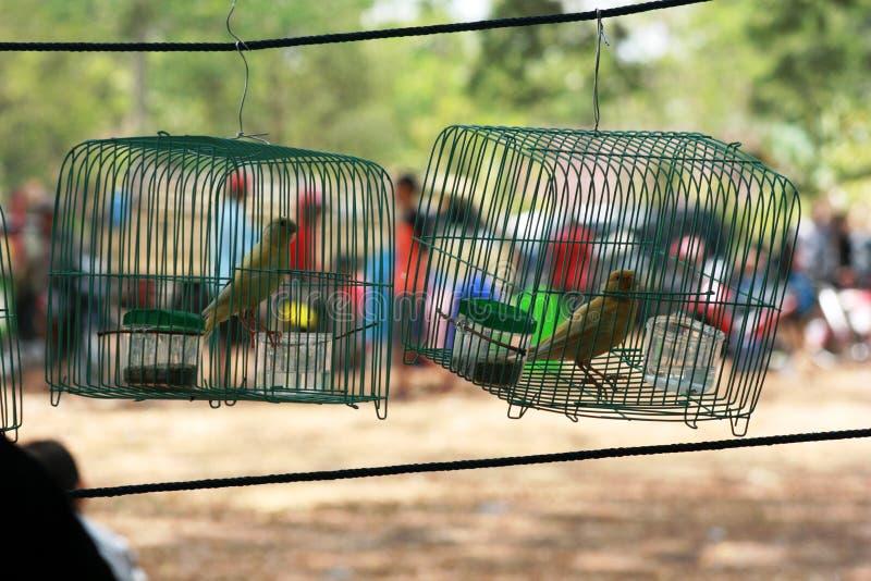 Pequeño pájaro en una jaula de hierro imagenes de archivo