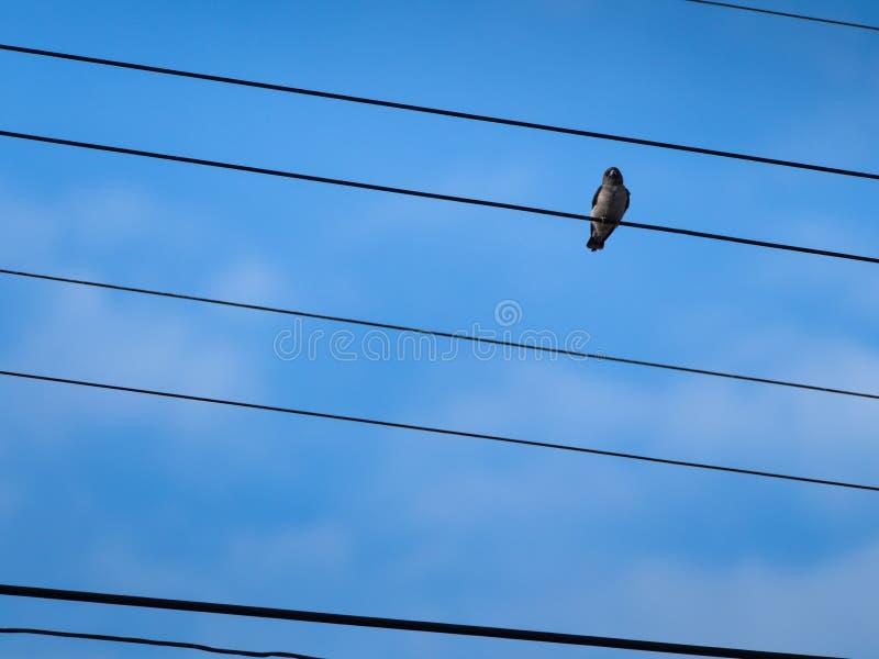 Pequeño pájaro encaramado en el cordón foto de archivo