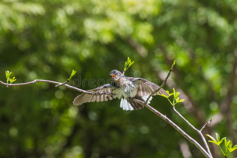 pequeño pájaro encendido fotografía de archivo