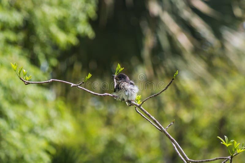 pequeño pájaro encendido imágenes de archivo libres de regalías