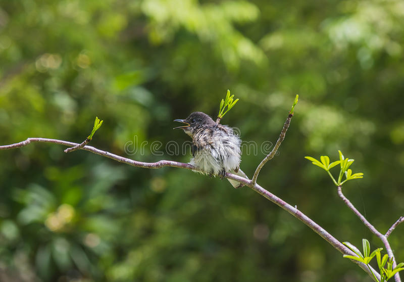 pequeño pájaro encendido fotos de archivo