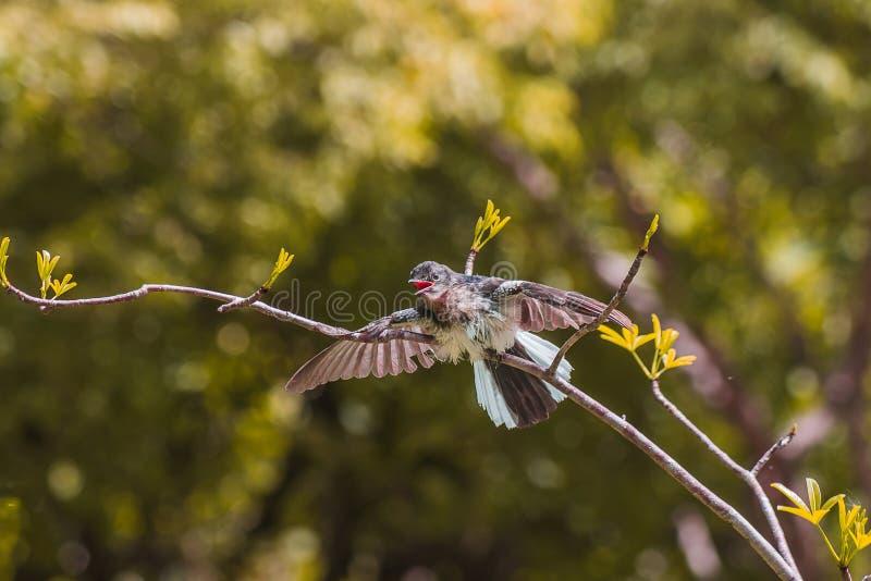 pequeño pájaro encendido imagenes de archivo