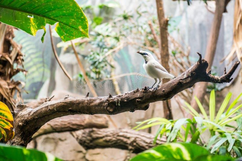 Pequeño pájaro exótico imagen de archivo