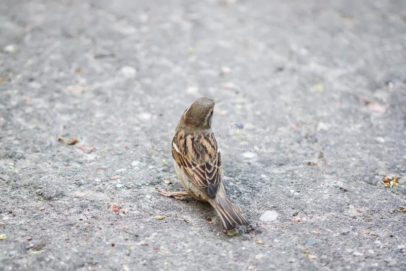 Pequeño pájaro hermoso del gorrión imágenes de archivo libres de regalías