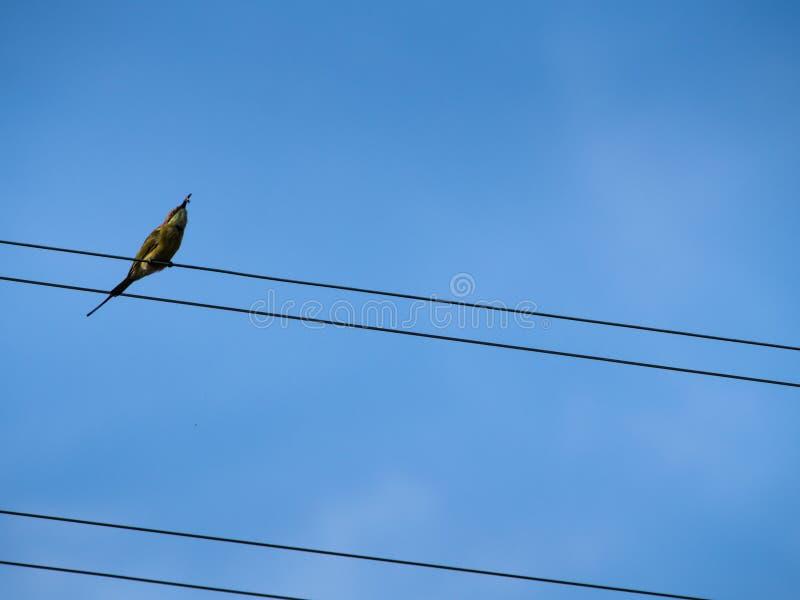 Pequeño pájaro que come el insecto que se coloca en los alambres imagen de archivo