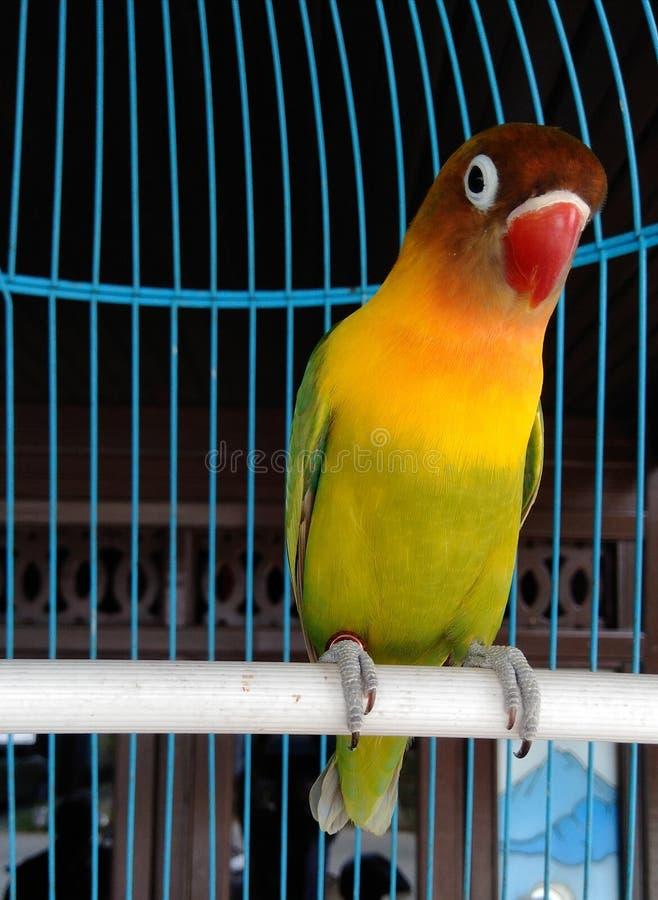pequeño pájaro verde en una jaula de madera foto de archivo libre de regalías