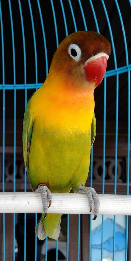 pequeño pájaro verde en una jaula de madera fotografía de archivo