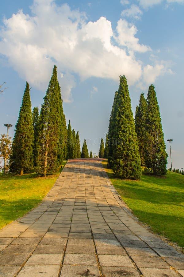 Pequeño paisaje hermoso de la colina con los árboles de pino altos en campo de hierba verde y el fondo blanco de la nube del ciel imagenes de archivo