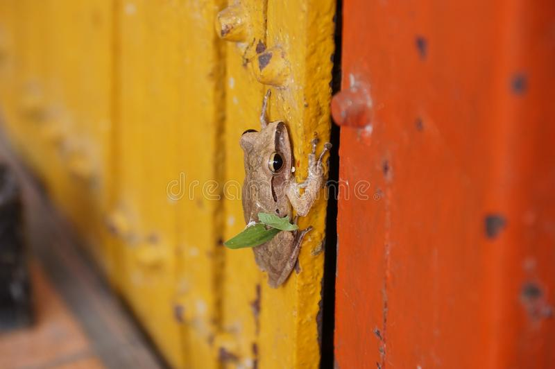 Pequeño palillo de la rana con la puerta roja del metal fotografía de archivo