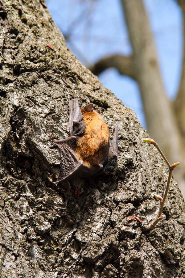 Pequeño palo en el árbol que se mueve hacia arriba fotos de archivo libres de regalías