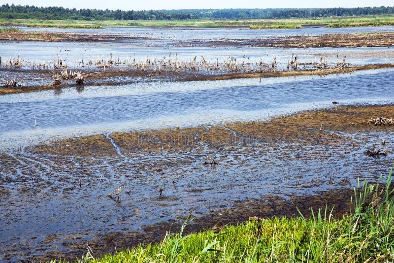 Pequeño pantano, lago foto de archivo libre de regalías