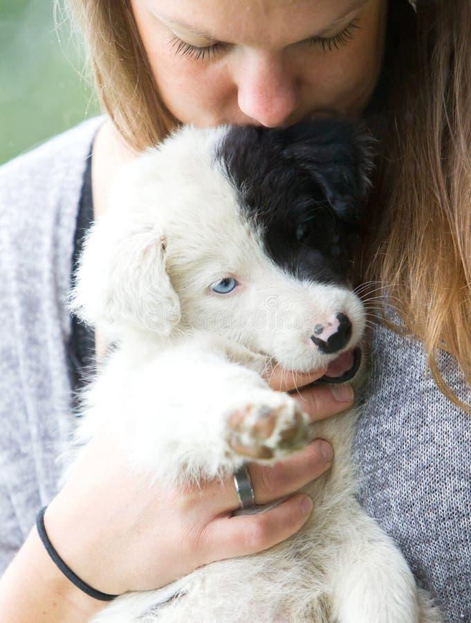Pequeño perrito del border collie con el ojo azul en los brazos de una mujer fotos de archivo