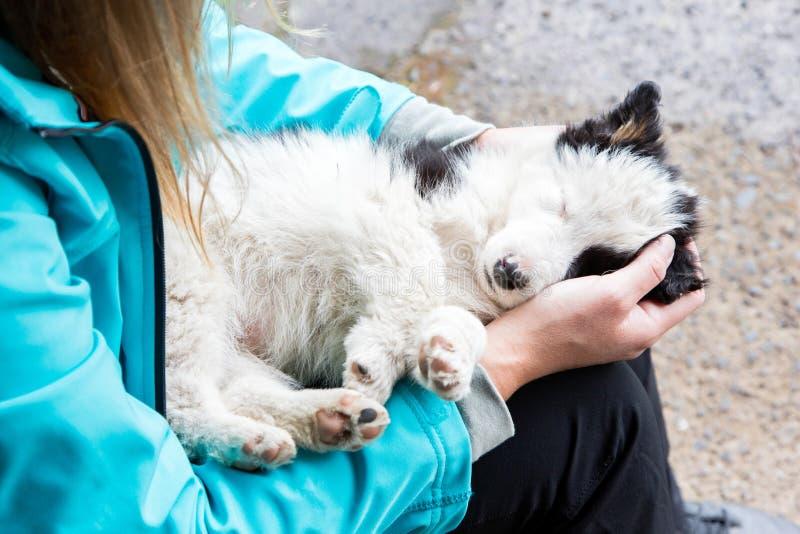 Pequeño perrito del border collie en los brazos de una mujer fotos de archivo