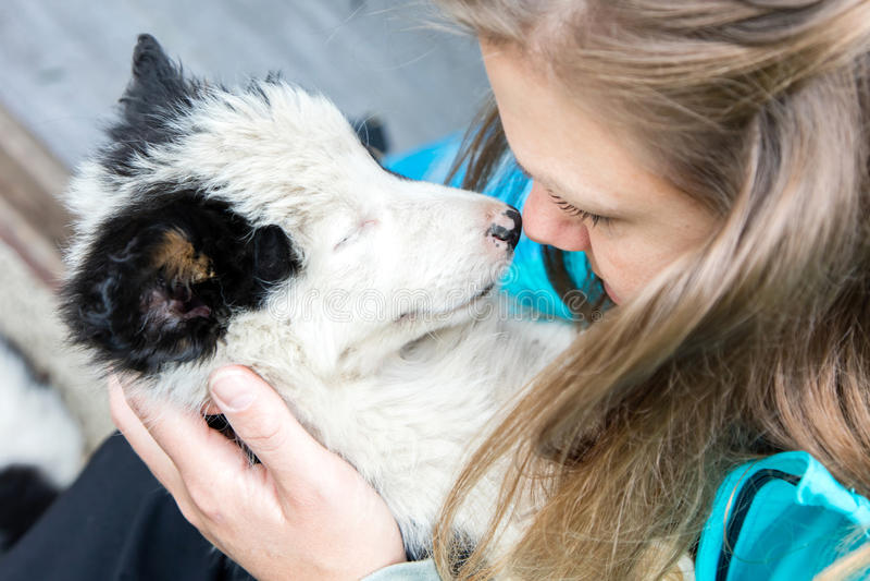 Pequeño perrito del border collie en los brazos de una mujer imagenes de archivo