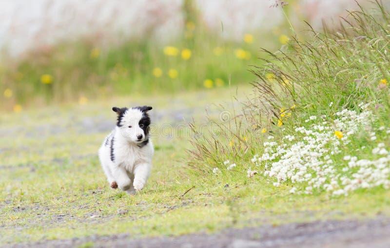 Pequeño perrito del border collie en una granja foto de archivo