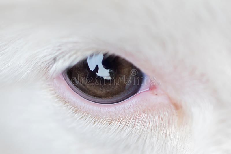Pequeño perrito en una granja, primer del border collie foto de archivo libre de regalías