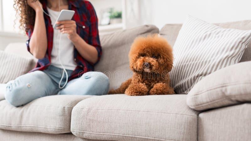 Pequeño perrito lindo del caniche en el sofá en casa imagen de archivo
