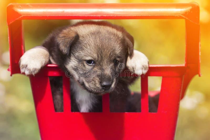 Pequeño perrito lindo que se sienta en el carro del ultramarinos y los píos divertidos imagen de archivo libre de regalías