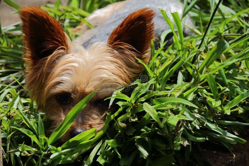 Pequeño perrito lindo y mimoso fotografía de archivo libre de regalías