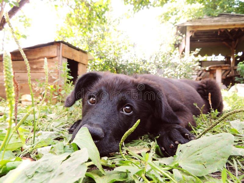 Pequeño perrito negro fotografía de archivo libre de regalías