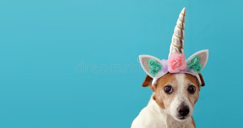 Pequeño perro blanco del unicornio divertido en fondo azul imagenes de archivo