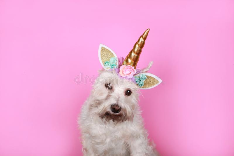 Pequeño perro blanco del unicornio en fondo rosado imagenes de archivo