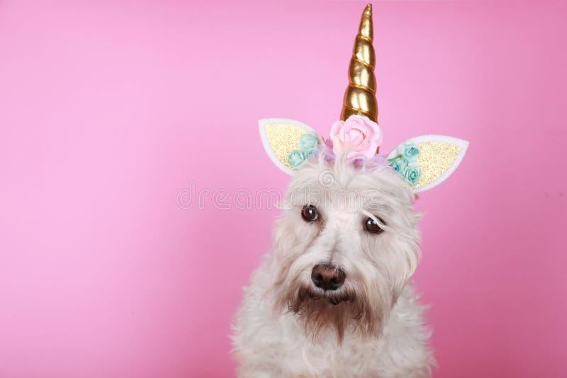 Pequeño perro blanco del unicornio en fondo rosado con el espacio de la copia imágenes de archivo libres de regalías