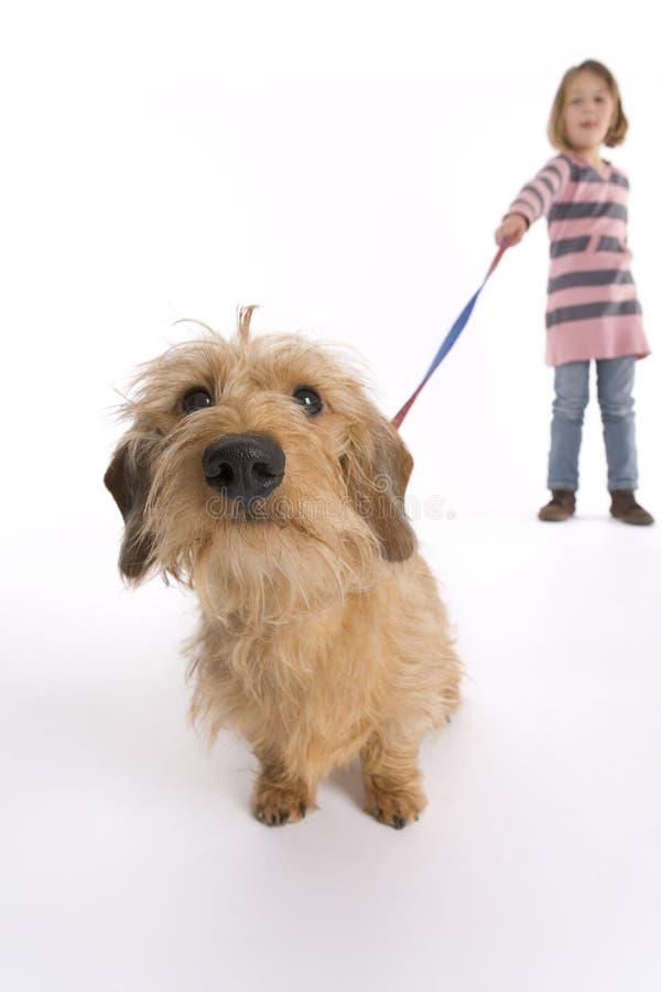 Pequeño perro de Cutious imágenes de archivo libres de regalías