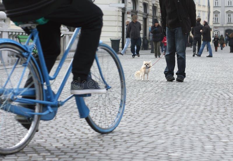 Pequeño perro de la ciudad en tráfico imagen de archivo