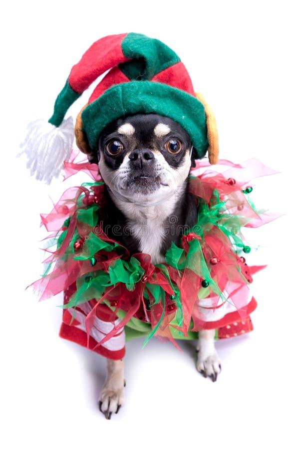 Pequeño perro del duende del ayudante de Santa imagen de archivo libre de regalías