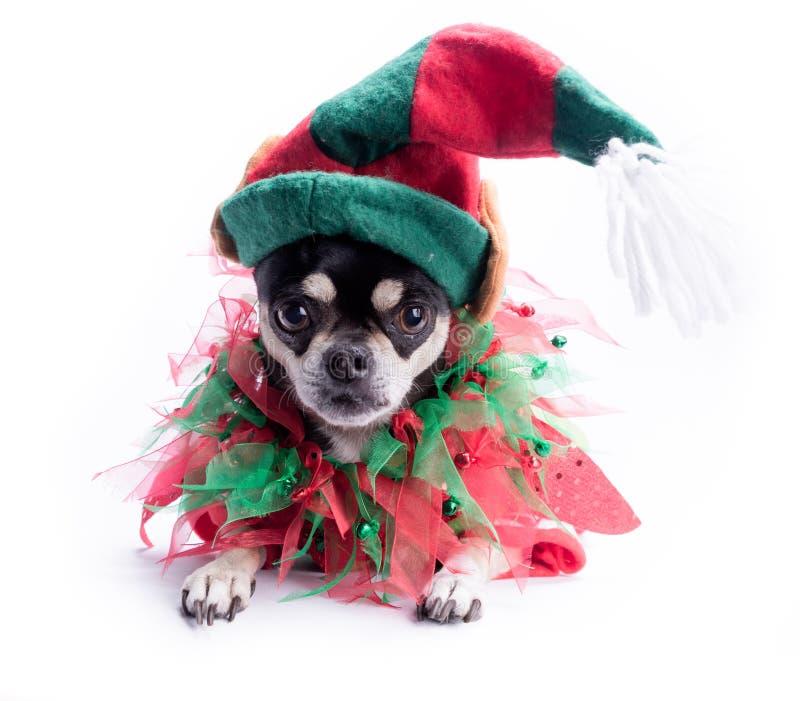 Pequeño perro del duende del ayudante de Santa imagenes de archivo