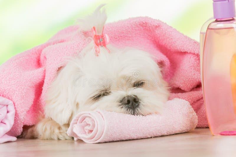 Pequeño perro en el balneario fotos de archivo libres de regalías