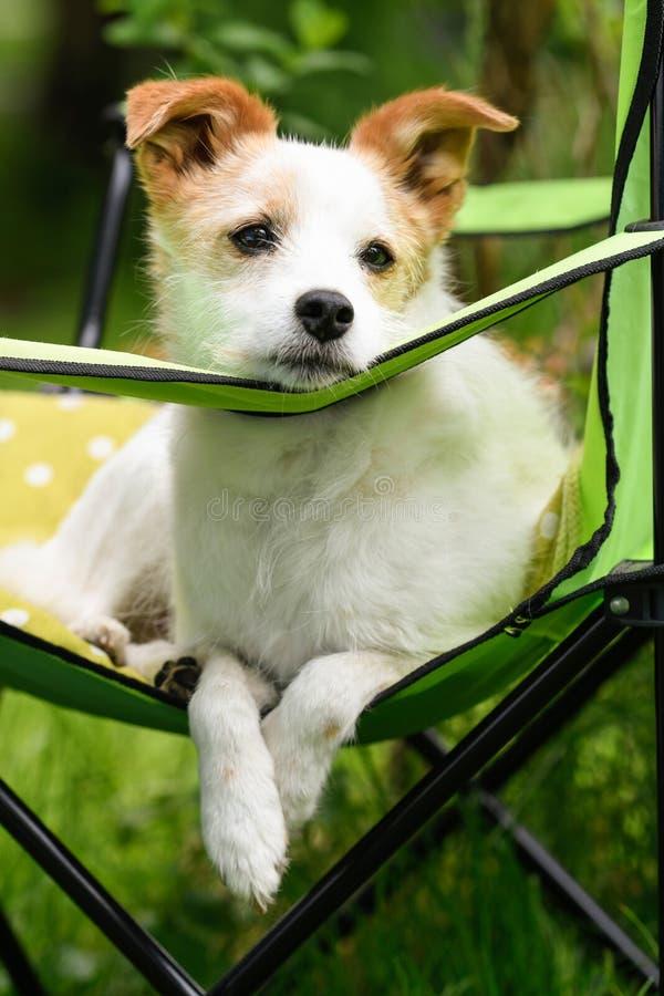 Pequeño perro en una silla de jardín imágenes de archivo libres de regalías