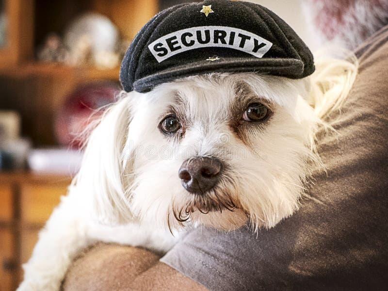 Pequeño perro guardián lindo de la seguridad imágenes de archivo libres de regalías