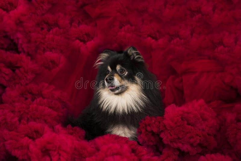 Pequeño perro lindo imagenes de archivo